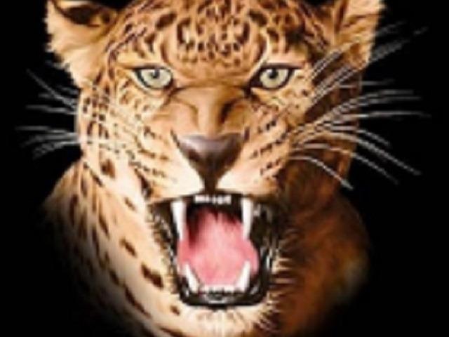 Leopards Win Elkins Jr. High Meet