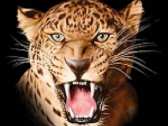 Lady Leopards Make It 3 in a Row