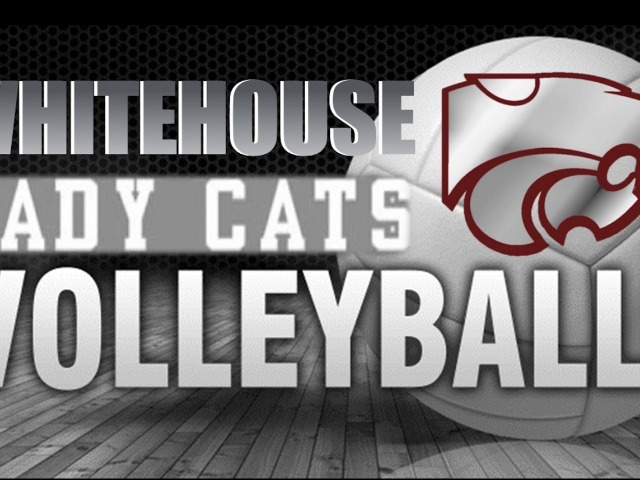 Image for LadyCat Volleyball
